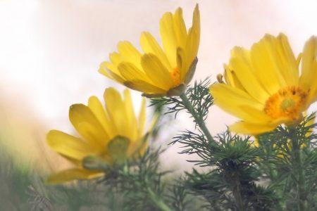 暖冬の本日、連休最終日。