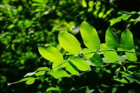 新緑の季節が…。